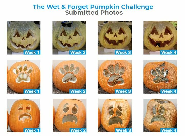 top gourd tips from pumpkin carving to jack o lantern preservation