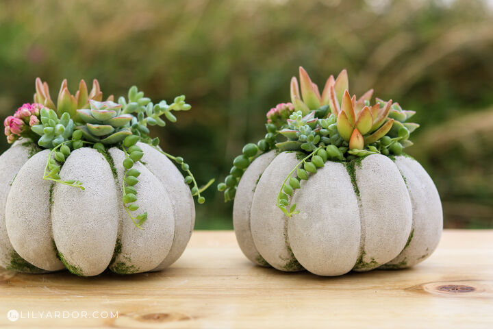 s 30 pumpkin projects for people that are totally obsessed with pumpkins, Succulent concrete pumpkins