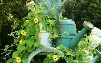 How to Grow Flowering Vines in Your Garden: 18 Ideas