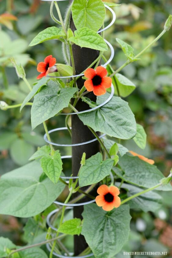 flowering vine trellis ideas