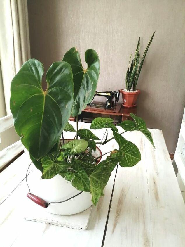 diy planter ideas from my kitchen