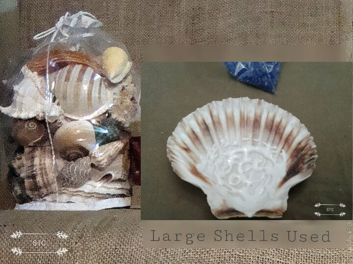 Purchased Seashell Collection