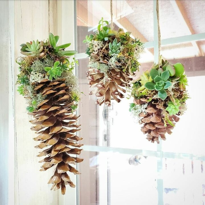 winter succulent decor