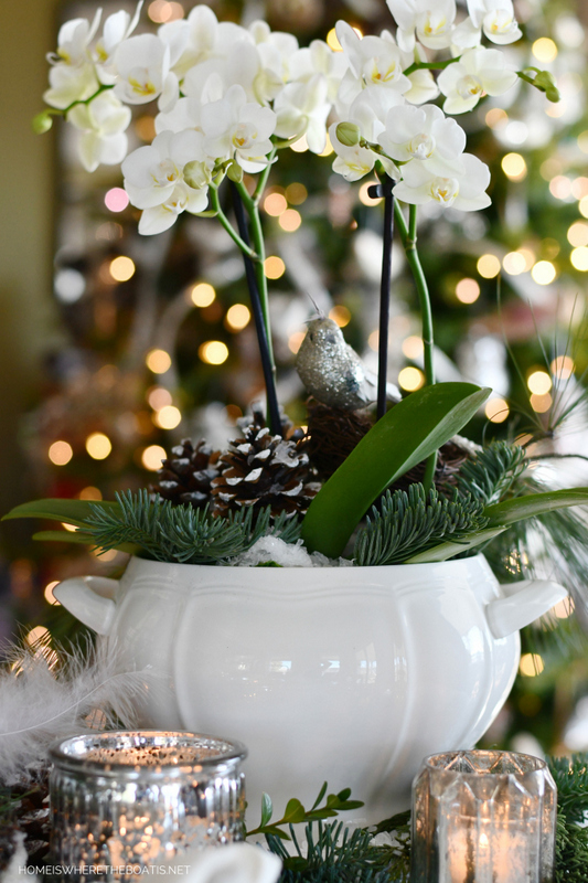 create a winter arrangement using a tropical plant