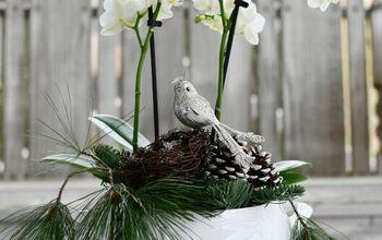 Create a Winter Arrangement Using a Tropical Plant