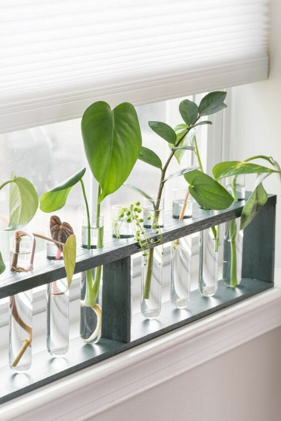 plant lovers check out my diy test tube plant propagation station