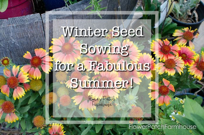 winter sowing for a beautiful garden