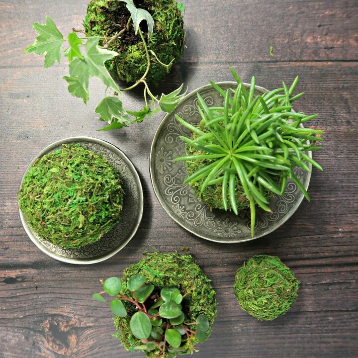 pretty as a picture succulent planter