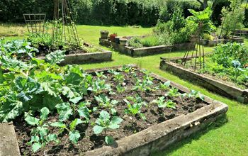 Top Tips for Growing Vegetables for the First Time