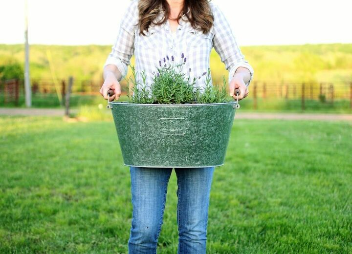 how to plant lavender in containers