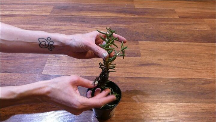 upside down planters