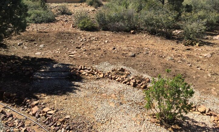 After removal of scrub oak