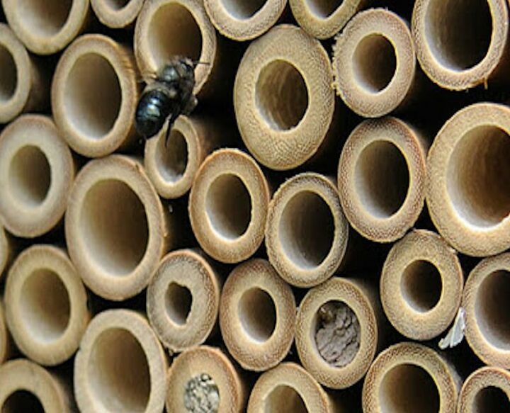 make a bee waterer
