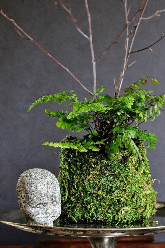 Himalayan maidenhair fern in a DIY moss pouch