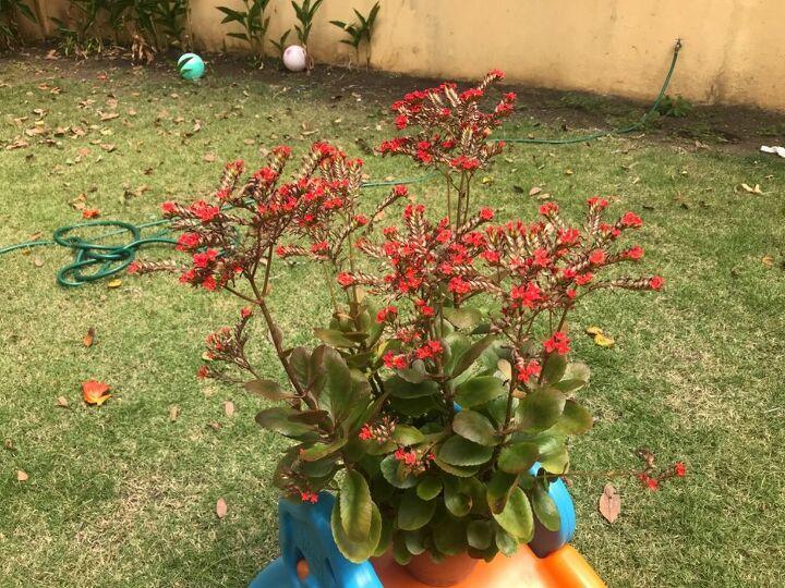 q help identifying this plant