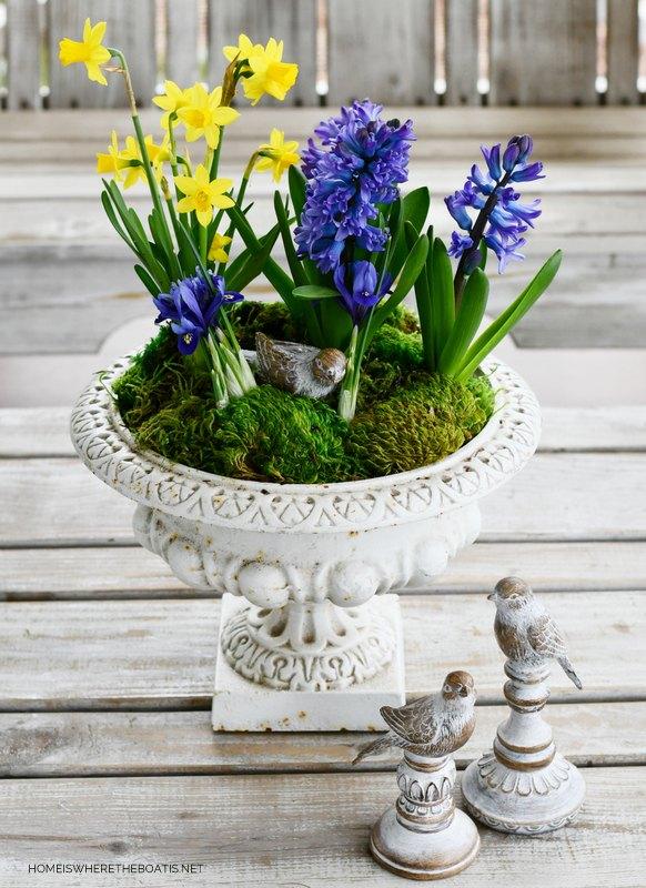 create an easy centerpiece with spring bulbs