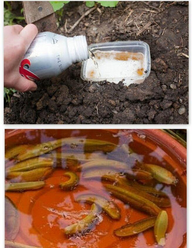 naturally control garden pests