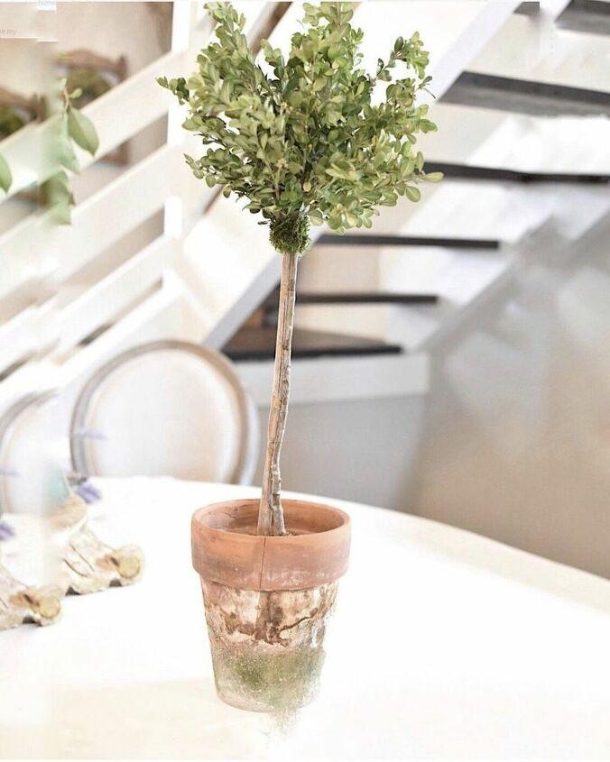 diy boxwood topiary