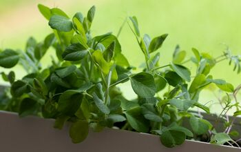 Grow Healthy Food Fast! Easy Greens You Can Grow Indoors.