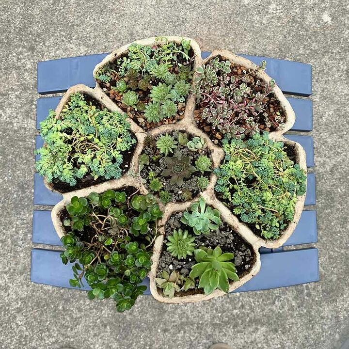 petal shaped cement succulent multi planter from a dollar tree mold