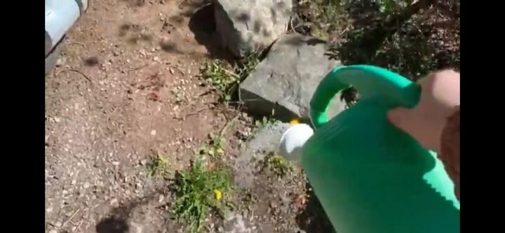 how to get rid of weeds with vinegar salt and dish soap