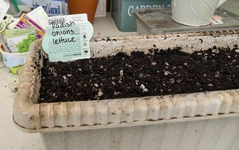 Sow a Salad Garden in a Window Box!