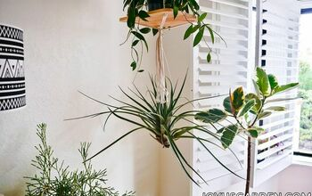 Hanging Air Plants: 10 Easy Ways to Hang Your Tillandsias