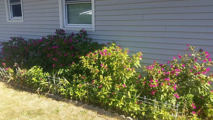 q need ideas to redo my flower beds
