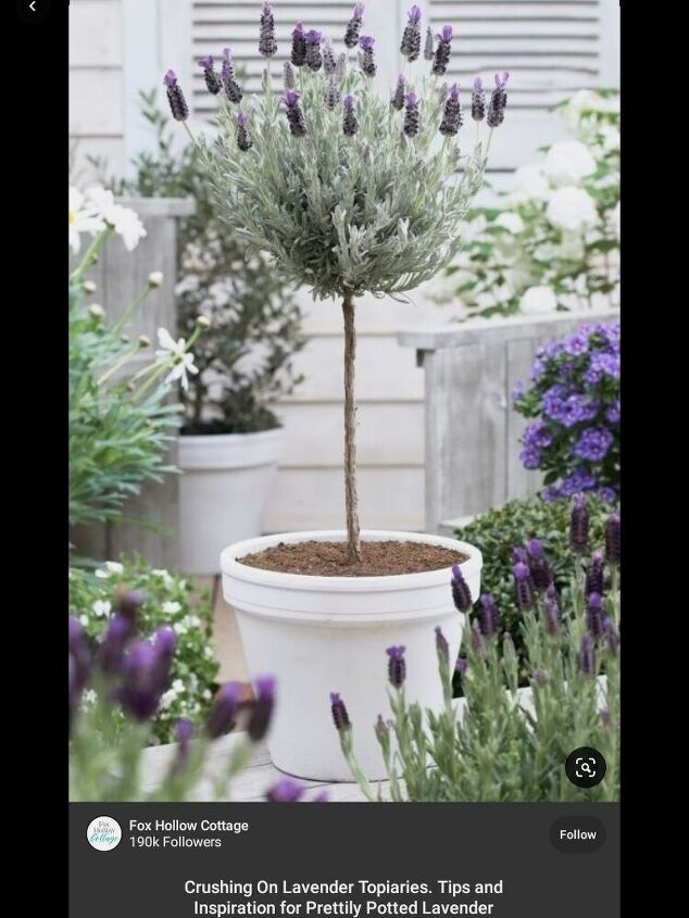 create and easy lavander topiary