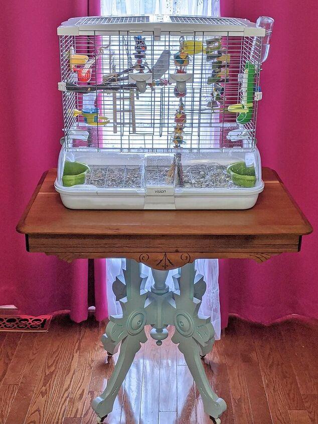 Our parakeets - Lemon & Sky  :)