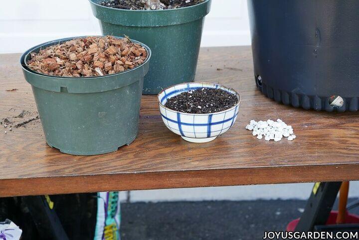 repotting plants basics beginning gardeners need to know