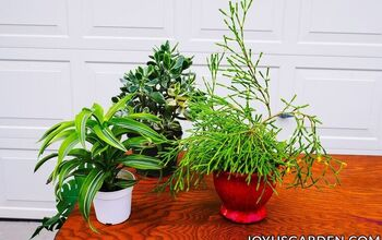 Repotting Plants: Basics Beginning Gardeners Need to Know