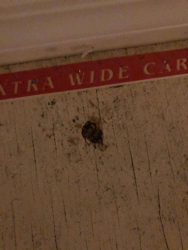q half inch round holes in subfloor pest