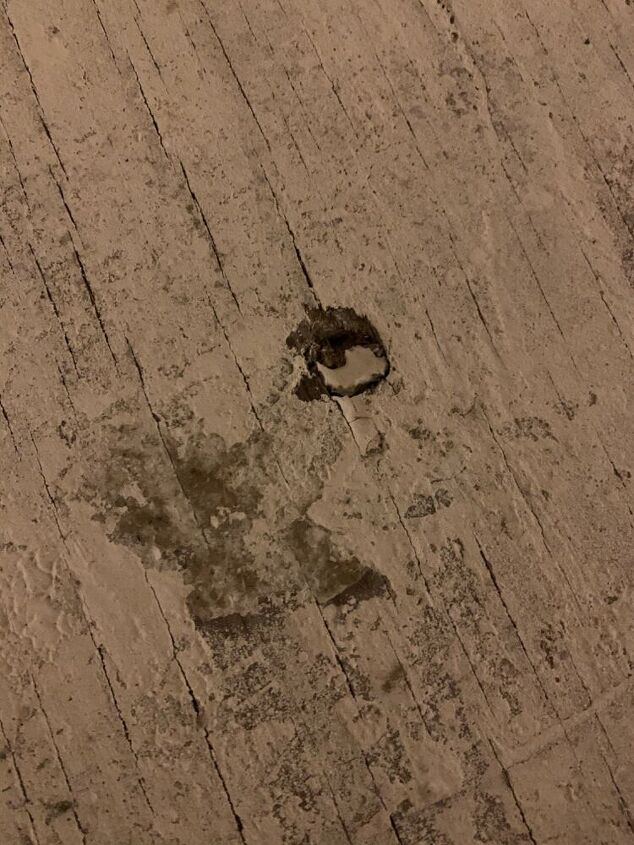 q almost perfectly round holes in subfloor any idea what pest