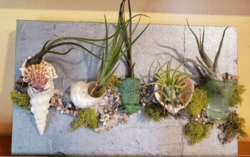 Air Plants Wall Hanging