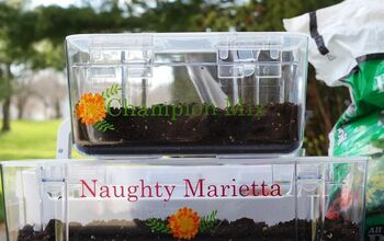 Mini Greenhouse Seed Starter