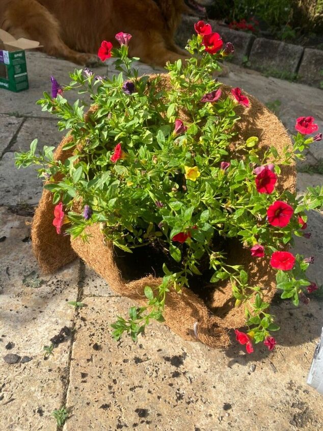 how to fill a whiskey barrel with flowers level up