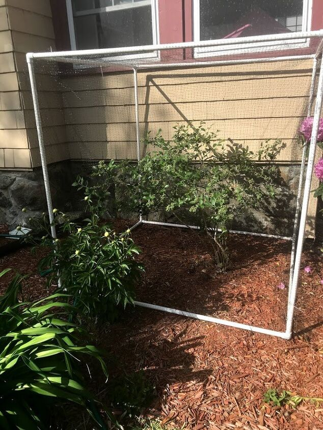 how to build an inexpensive blueberry bush cover