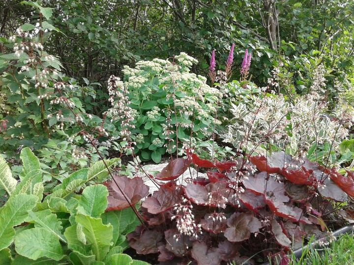 perennial maintenance divide multiply and grow healthy plants