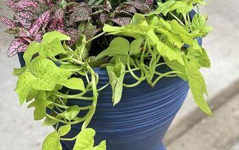 Easy Formula for Amazing Planters