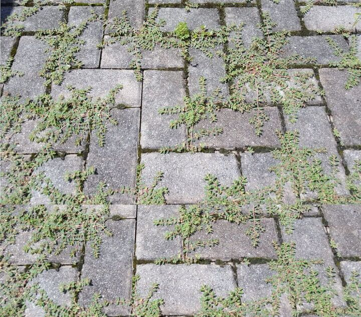 how to finally kill weeds on your brick patio for good