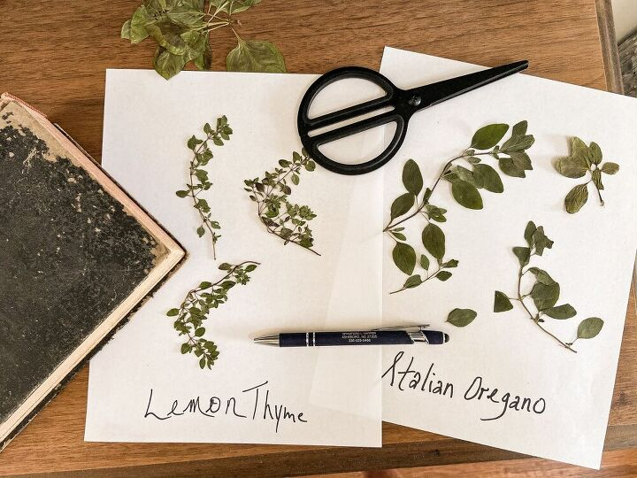 how to press herbs for botanical art