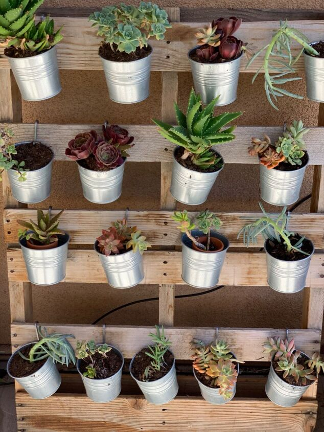 hanging succulent palette wall, The Hanging Succulent Wall