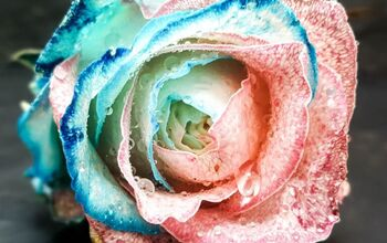 How To Make Candy Floss Roses