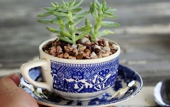Succulents in a Tea Cup