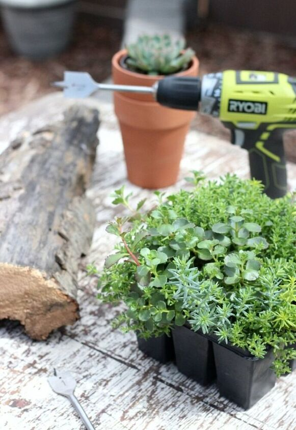 drift wood for potting succulent plants to decorate the garden
