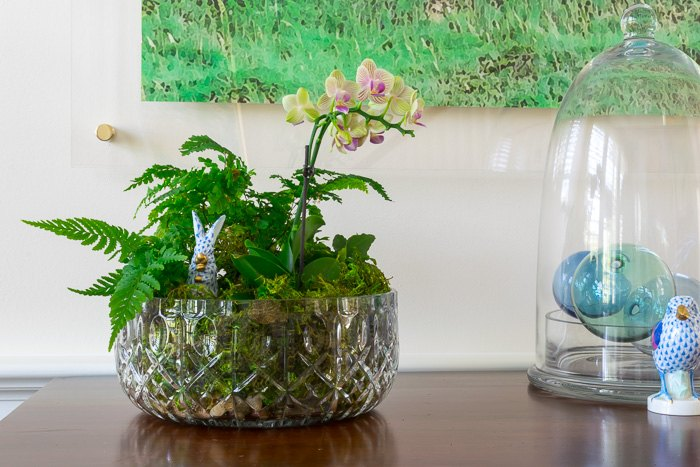 living centerpiece with orchids and ferns