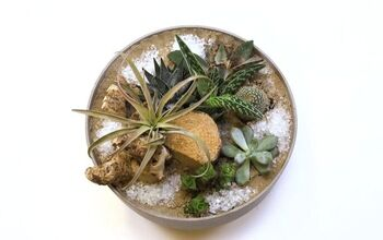 DIY: Succulents in a Bowl