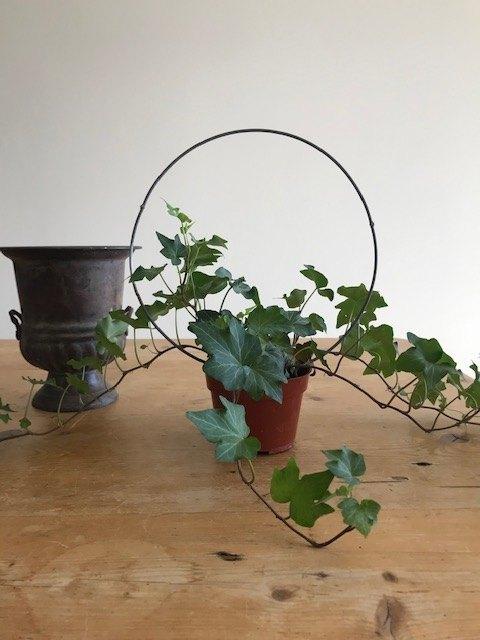 easy ivy topiary