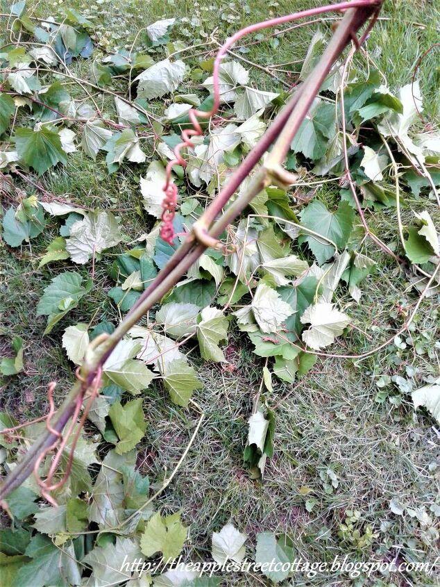 grapevine wall planter